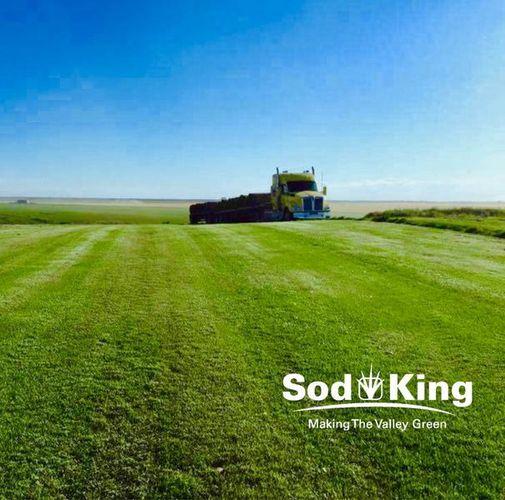 🥇SOD - KING BLUE™️ - Kentucky Bluegrass Delivered for sale in Salt Lake City , UT