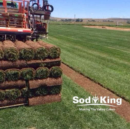 🥇SOD - KING BLUE™️ - Fresh Cut Kentucky Bluegrass for sale in Salt Lake City , UT