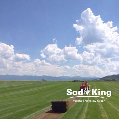 🥇SOD - KING BLUE™️ - Direct From The Farm for sale in Salt Lake City , UT