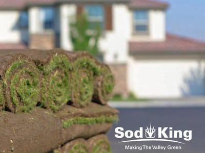 🥇SOD - KING BLUE™️ - Kentucky Bluegrass Sod