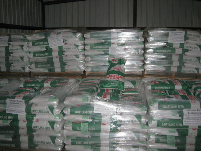 Dairyland Alfalfa Seed at the discount for sale in Enterprise , UT