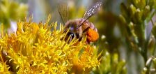 Utah bill would provide incentives to plant bee-friendly foliage