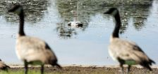 Sugar House Park pond to be drained early amid Utah drought