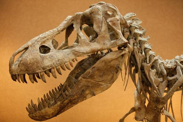 Ksl Com Cars >> T. Rex soft tissue found in fossil likely contains DNA | KSL.com