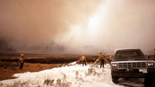 25 years later, Yellowstone still shaped by 1988 fire ...