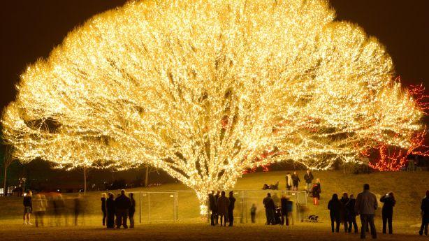Image result for Tree of Life draper utah