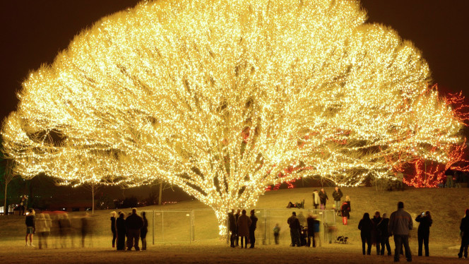 Ksl Classifieds Mobile >> Draper City tree becomes 'Tree of Life' for residents ...