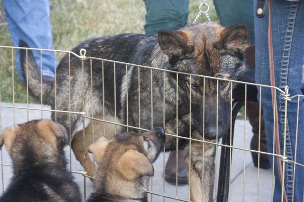 Photos Local Puppies Start Journey To Becoming Law Enforcement Dogs