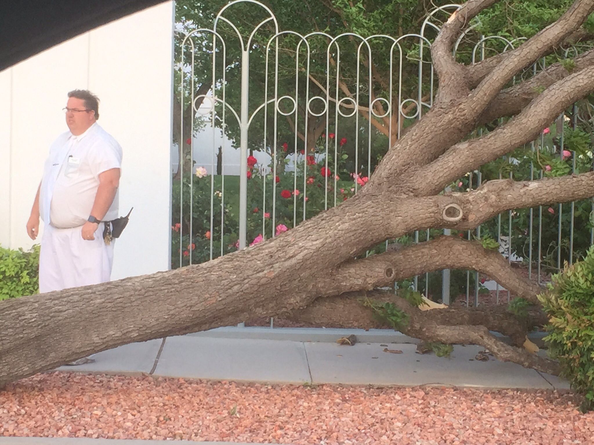 Fashion corner bountiful utah - Tree Topples At St George Temple I Took This Picture Tonight Coming Out Of The St George Temple The Fierce Winds Toppled This Tree