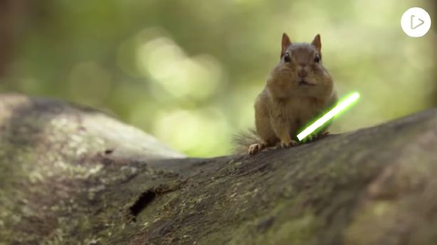 Have You Seen This? Jedi chipmunk lightsaber battle
