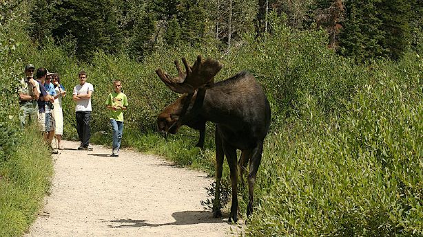 What to do/not do when encountering wild animals in Utah ...