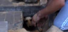 Vecinos rescatan a perra embarazada enterrada debajo de una acera que había sido reparada