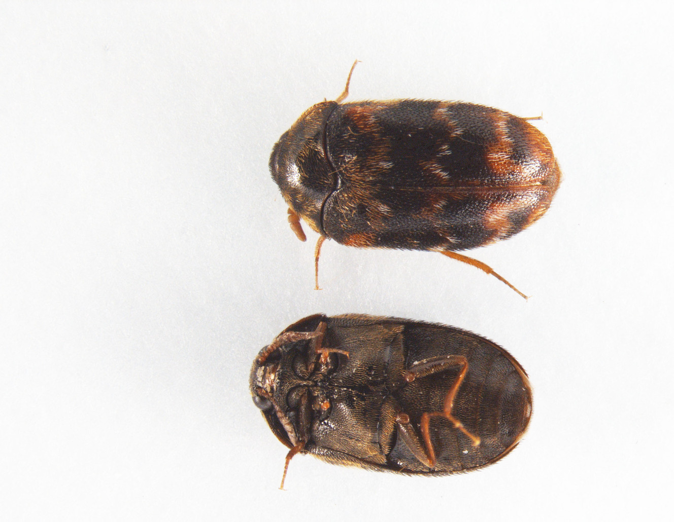 5 Of The Most Common Insects In Utah Ksl Com