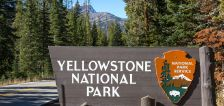 Mike Godfrey: Yellowstone video of mother grizzly charging woman reminds tourists to give wildlife space