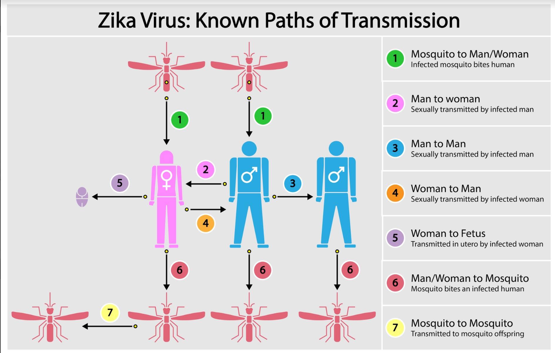 Sexually transmitted zika