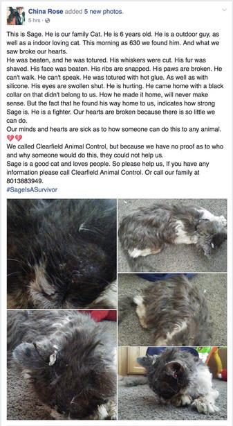Reward approaches $50K in tortured Clearfield cat case | KSL com