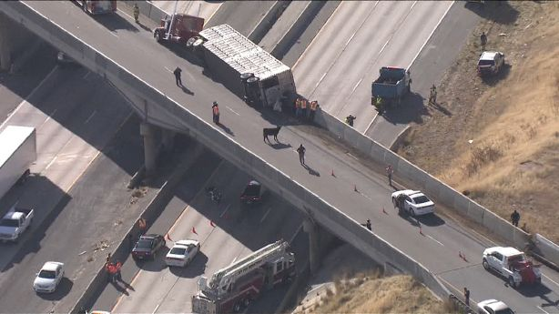 Cows fall from I-84 overpass onto southbound I-15 after semitrailer
