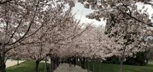 User submitted: Spring is finally here and we've got photos to prove it