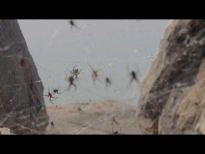 Spiders blanket shoreline at Great Salt Lake Marina