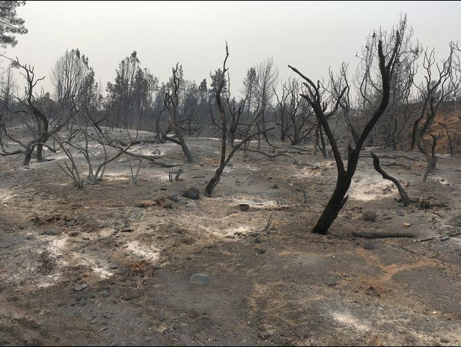 Hope grows as deadly Northern California blaze slows down