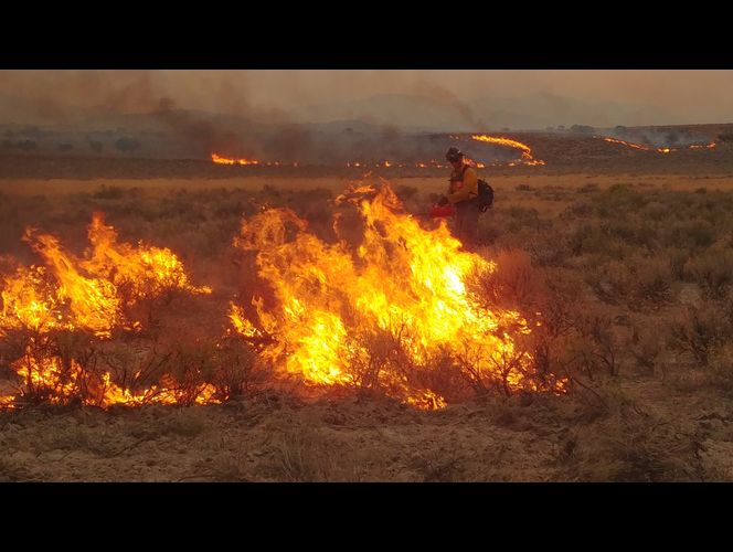 Wildfire updates: Goose Creek Fire grows to nearly 120K acres