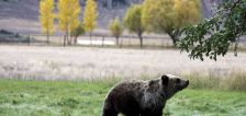 Hiker injured by grizzly bear in Yellowstone National Park