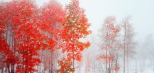 User submitted: The first snow of the season has arrived!
