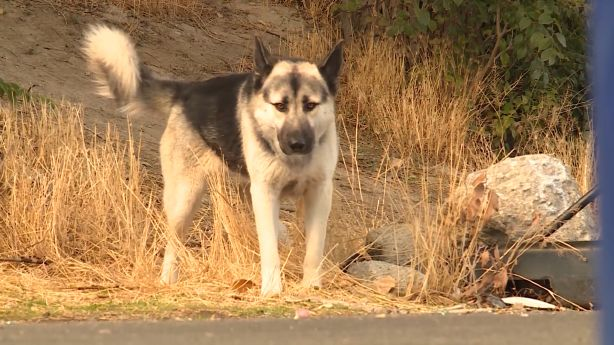 Elusive feral dog that developed 'love of blood' spotted, killed