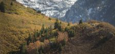 User submitted: More early snow mixes with fall foliage