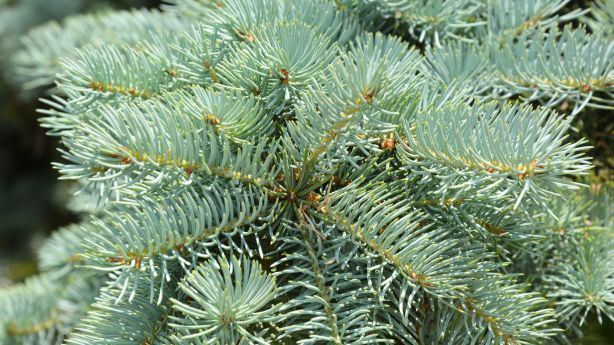 - A Guide To Cutting Down Your Own Christmas Tree In Utah KSL.com
