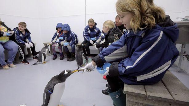 Utah aquarium celebrates Penguin Awareness Day