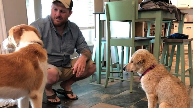 Veteran reunited with rescued dog, puppy months after returning from Iraq