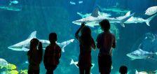 Loveland Living Planet Aquarium receives highest accreditation