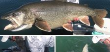 Massive lake trout smashes the catch and release record at Flaming Gorge
