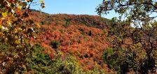 Pics of the month: Utah's leaves are turning and we're here for that