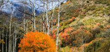 Pics of month: Utah's fall colors turned to ice in October