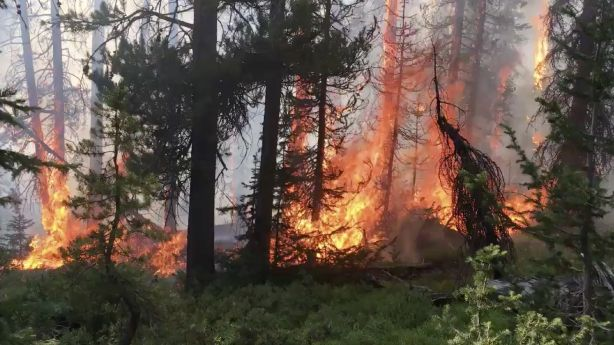 Wildfire Updates: Upper Provo Fire in Uinta Mountains now 44% contained