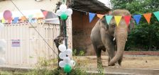 Pakistan's lonely elephant serenaded one last time at farewell party