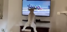 Have You Seen This? Dog can't handle horse racing