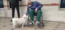 Never gonna give you pup: Dog waits for owner outside Turkish hospital