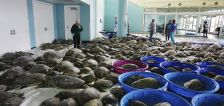 Texans brave frigid temps to save thousands of sea turtles amidst deadly arctic storm