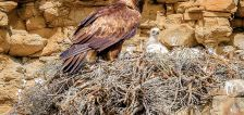 Why biologists want you to report raptor nest locations in Utah