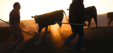 'Every day is Meat Day in Utah': A look at the war of beef