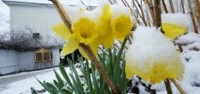 Heavy, wet snow shows another side of spring in New England
