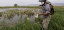 Does spraying pesticides to control mosquitoes near Great Salt Lake do more harm than good?