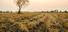 U of U experts explain the economic and environmental impact of droughts and fires