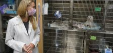 COVID-19 pet boom has veterinarians backlogged, burned out