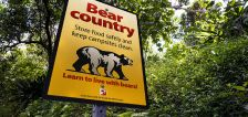 Why Utah wildlife experts say there might be a greater chance for bear 'conflicts' this year