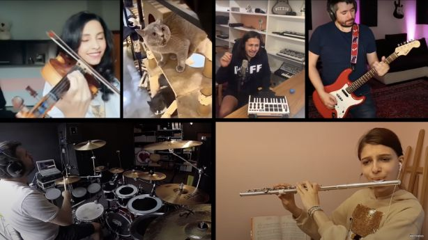 Angry Cat Inspires Musicians From Around the World