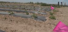 Farmers say drought could devastate Utah's produce supply